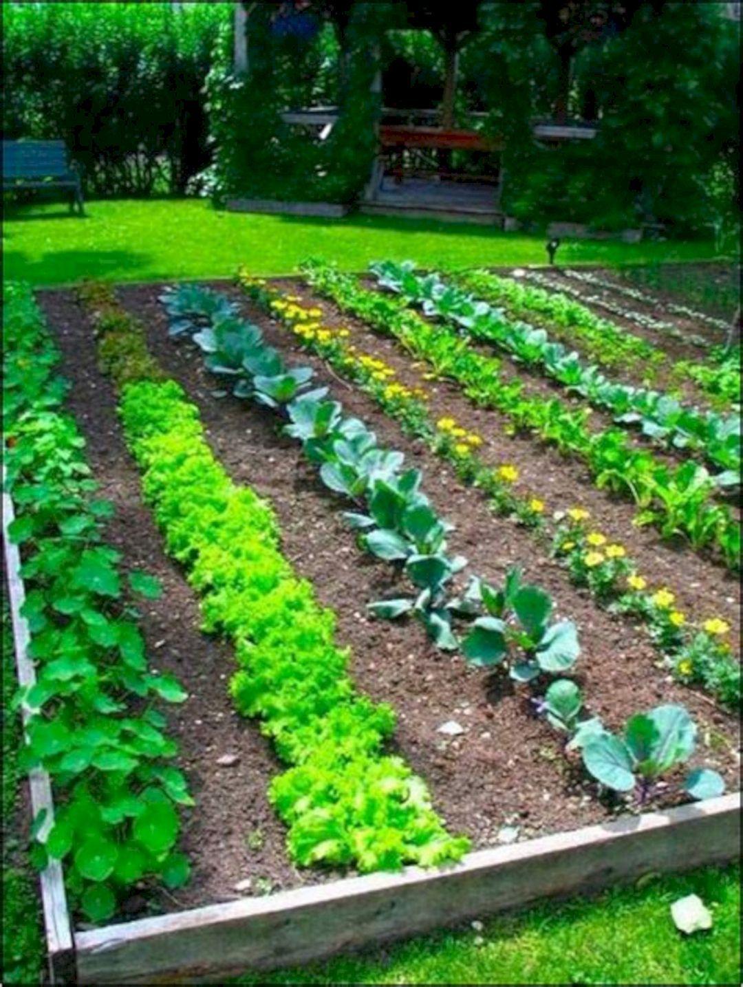 Easy Vegetable Garden Ideas