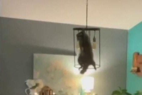Florida Woman Raccoon Christmas Tree