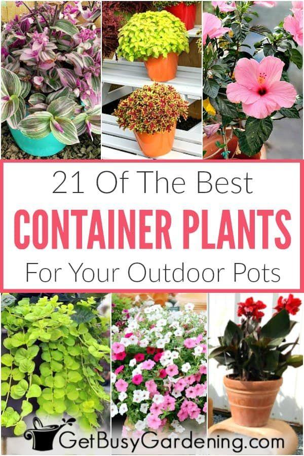 Best Plants For Pots Outdoor