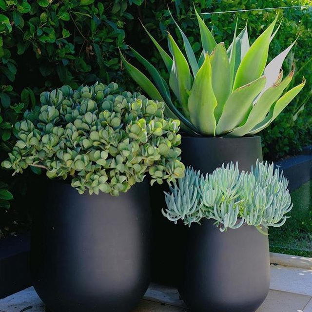 Low Maintenance Outdoor Potted Plants