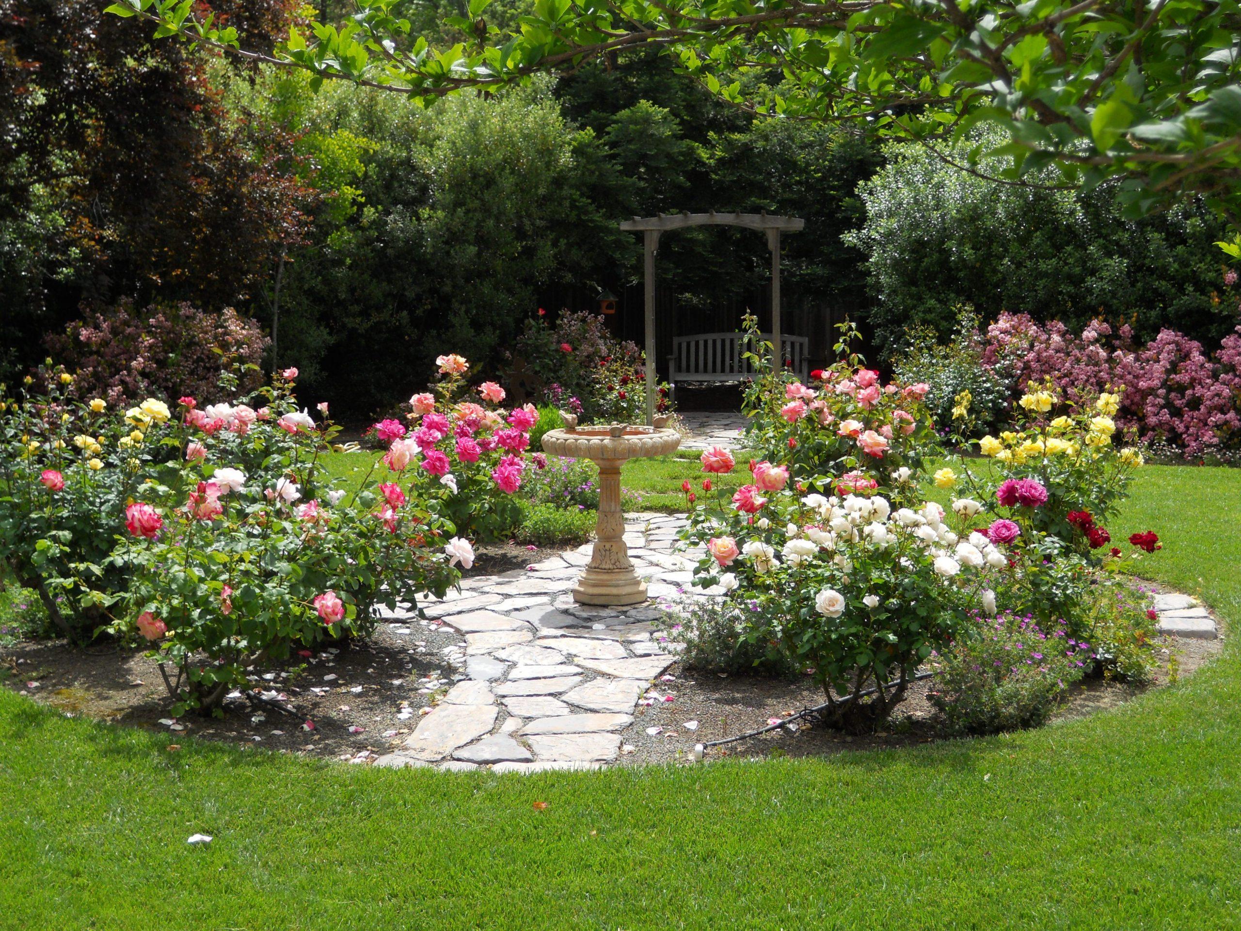 Rose Garden Ideas For Backyard