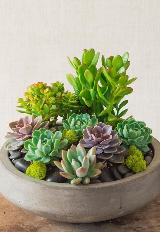 Indoor Succulent Garden Ideas